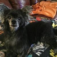 Adopt A Pet :: Petey - Mooresville, NC