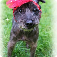 Adopt A Pet :: Abby - Shippenville, PA