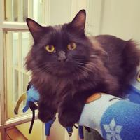 Adopt A Pet :: Lancelot - Hastings, MN