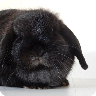 Lop-Eared Mix for adoption in Long Beach, New York - Happy