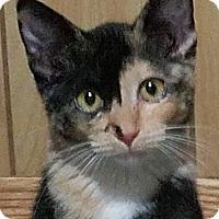 Adopt A Pet :: Amelia - Colfax, IA