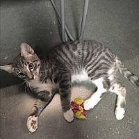 Adopt A Pet :: Mozart - Winchester, CA