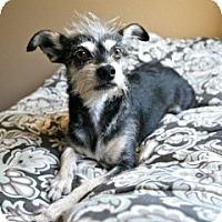 Adopt A Pet :: Freddie - Orange, CA