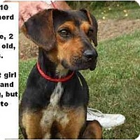 Adopt A Pet :: # 404-10 - ADOPTED! - Zanesville, OH