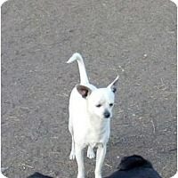 Adopt A Pet :: Chance - Poway, CA