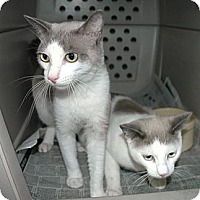 Adopt A Pet :: BFFs Egypt and BB - Laguna Woods, CA