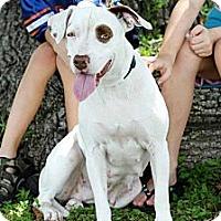 Adopt A Pet :: Princess - Bartow, FL