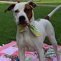 Adopt A Pet :: Anna - Washington, PA