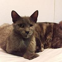 Adopt A Pet :: Skyler - Brainardsville, NY