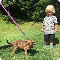 Adopt A Pet :: Max - Allentown, PA