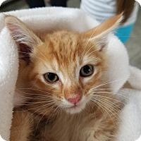 Adopt A Pet :: Charlie - Montgomery City, MO