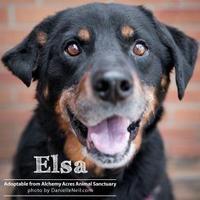 Rottweiler Mix Dog for adoption in Salem, Ohio - Elsa