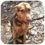 Photo 1 - German Shepherd Dog/Siberian Husky Mix Dog for adoption in Oak Ridge, New Jersey - Harmony