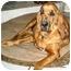 Photo 3 - Bloodhound Dog for adoption in Phoenix, Arizona - Abbie