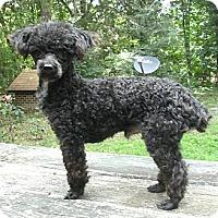 Adopt A Pet :: Savin - Greensboro, NC