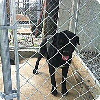 Adopt A Pet :: name to be given - Donaldsonville, LA