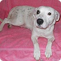 Adopt A Pet :: Annie - Wilmette, IL