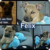 Adopt A Pet :: Felix - Geismar, LA