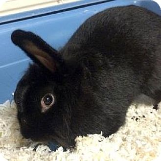 Other/Unknown Mix for adoption in Janesville, Wisconsin - Carrot Cake