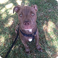 Adopt A Pet :: MAX - Ojai, CA