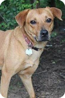 Shepherd (Unknown Type)/Hound (Unknown Type) Mix Dog for adoption in Yukon, Oklahoma - Edison