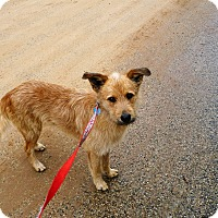 Adopt A Pet :: Rascal - Wisconsin Dells, WI