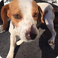 Adopt A Pet :: Mojo - Cashiers, NC