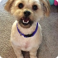 Adopt A Pet :: PeeWee - Redondo Beach, CA