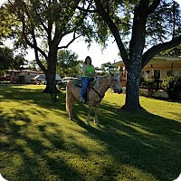 Adopt A Pet :: Cheyenne - Kemp, TX