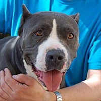 Adopt A Pet :: Athena - Las Vegas, NV