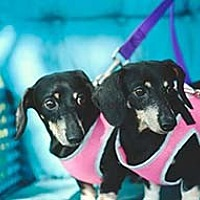Adopt A Pet :: Darby and Missy - Jacksonville, FL
