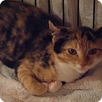 Adopt A Pet :: Callie - Kensington, MD