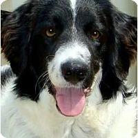 Adopt A Pet :: CODY**Helper** - Wakefield, RI