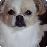 Adopt A Pet :: Lucy Lu - Fort Lauderdale, FL