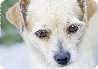 Terrier (Unknown Type, Medium) Mix Dog for adoption in Brooklyn, New York - Diamond