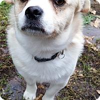 Adopt A Pet :: Chip - PENDING ADOPTION - Post Falls, ID