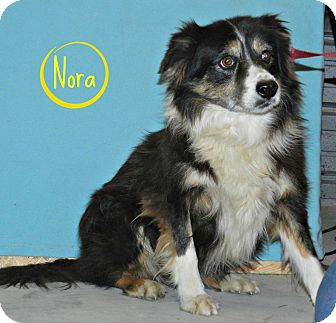 Border Collie Mix Dog for adoption in Lawrenceburg, Tennessee - Nora
