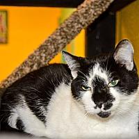 Adopt A Pet :: Sans - Pittsburg, KS