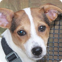 Adopt A Pet :: Penny - North Olmsted, OH