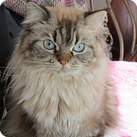 Adopt A Pet :: Truffles - Davis, CA