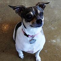 Adopt A Pet :: Betsy - Green Bay, WI
