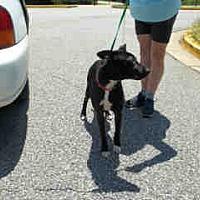 Adopt A Pet :: Grace - Newnan City, GA