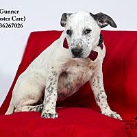 Adopt A Pet :: Gunner  (Foster Care) - Baton Rouge, LA