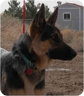 German Shepherd Dog Dog for adoption in Las Vegas, Nevada - Chiyona