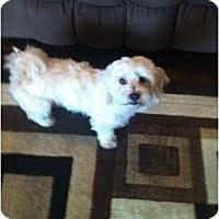 Adopt A Pet :: Lillie - Oceanside, CA