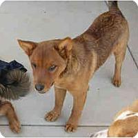 Adopt A Pet :: Peepers - Scottsdale, AZ