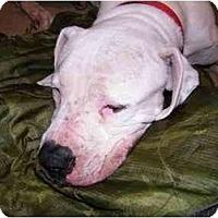 Adopt A Pet :: Sasha - Sierra Vista, AZ