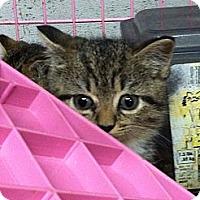 Adopt A Pet :: Ellie - Island Park, NY