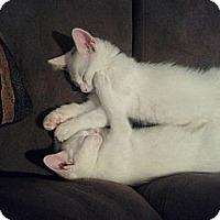 Adopt A Pet :: Loki - Lakeland, FL