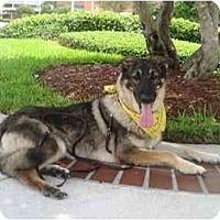 Adopt A Pet :: Stella - Green Cove Springs, FL